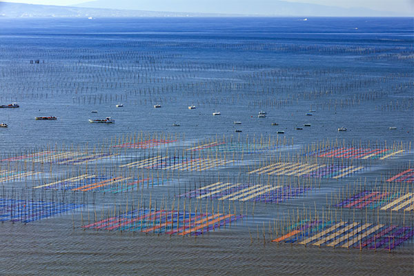 nori seaweed ariake sea
