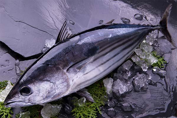 shipjack-tuna
